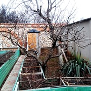 Обрезка персиков и других плодовых растений фото