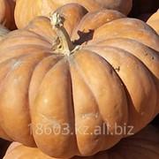 Семена тыквы Маск де Провонс фото