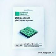 Микроклевер Trifolium repens, 30 г фото
