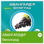 Удобрения АВАНГАРД®Р Виноград фото
