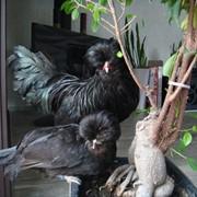 Падуан взрослая семья. фото