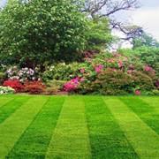 Создание газонов и нетравяных покрытий фото