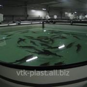 Плавальный басейн с полипропилена для виращивания рыбы - малька,зарыбка,раков фото
