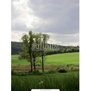 Экспертная оценка земельных участков фото