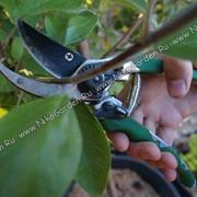 Весенняя обрезка плодовых насаждений фото