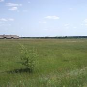 Земли коммерческого назначения Макаровский р-н, с. Марьяновка, 11.47 га фото
