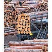 Экспорт леса, древесиный фото
