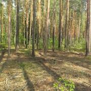 Услуги по заготовке древесины фото