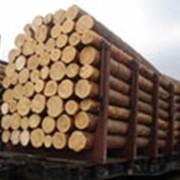 Лес строительный, дуб фото
