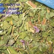 Кипрей узколистный - Rose-bay willow herb leaf фото