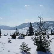 Зимний отдых в Карпатах фото