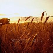 Сельскохозяйственное предприятие в Краснодарском крае фото
