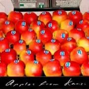 Яблоки зимние, Канзи KANZI, импортная продукция ОПТОМ фото