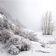 Художественная фотография Зимний этюд картина, Казахстан фото