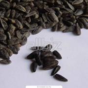 Переработка и реализация семечек. Переработка семян подсолнечника, тыквы фото