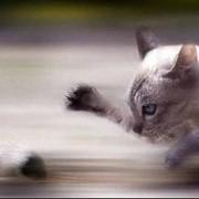 Уничтожение крыс и мышей. Борьба с грызунами в помещении и на прилегающей территории. фото