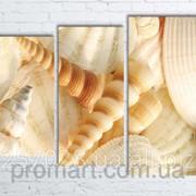 Модульна картина на полотні Морські мушлі код КМ80106-096 фото