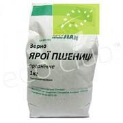Зерно яровой пшеницы 1 кг фото