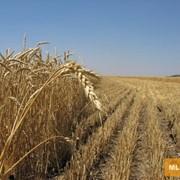 Земля для сельскохозяйственного назначения фото