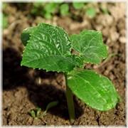 Регуляторы роста для растений фото