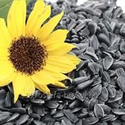 Seminte de floarea soarelui din Moldova de la AGROSFERA-BM фото