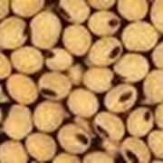Закупка семян масличных культур фото