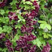 Семена экзотических растений фото