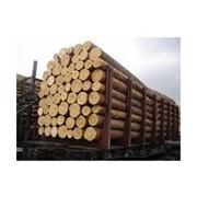 Лес-кругляк для срубов домов, бань, беседок фото