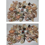 Морские ракушки наборные фото