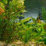 Проектирование аквариума фото