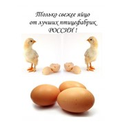 Яйцо куриное фото
