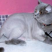 Гигиенические процедуры для кошек фото