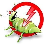 Уничтожение тараканов. фото