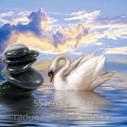 Картина стразами в 3Д Лебедь на рассвете 50х50 см фото