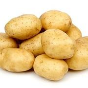 Картофель импортный ала фото