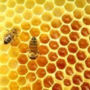 Мед кипрейный фото