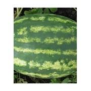 Семена арбуза Медисон F1 / Medison F1 фото