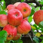 Яблоки Айдаред в Молдове фото