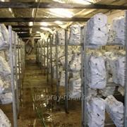 Поддержания влажности при выращивании грибов фото