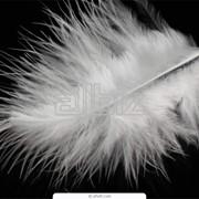 Пух и перья фото
