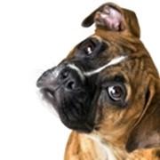 Обработка глаз животным фото