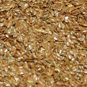 Лен масличный. Экспорт из Казахстана фото