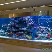 Овальный аквариум фото