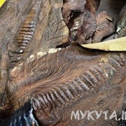 Лоскуты кожи лап страуса фото