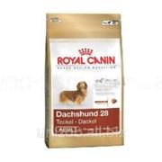 Сухой корм для собак Royal Canin Dachshund 28 Adult 1,5 кг фото