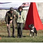 Универсальная дрессировка собак фото