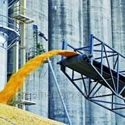 Экспорт пшеницы 3, 4 класса фото