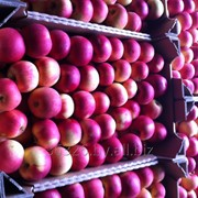 Свежие яблоки фото