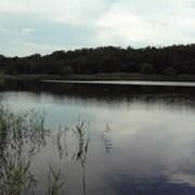 Домики на берегу пруда фото