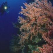 Подводные поисковые экспедиции фото